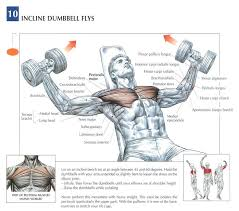 What Do Bench Presses Work Out Flat Bench Press Muscles Worked Part 46 How To Do Machine Flat