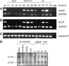 silencing of caspase 8 in murine hepatocellular carcinomas is