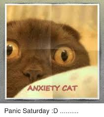Anxiety Cat Memes - 25 best memes about anxiety cat anxiety cat memes