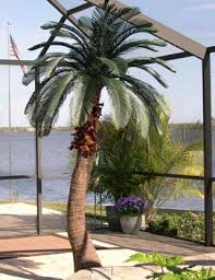 exciting artificial palm trees for sale 97 on home design modern