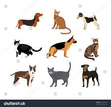 cats dogs vector illustration showing different stock vector