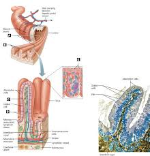 Anatomy And Physiology Labeling Art Labeling Quiz