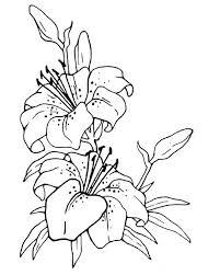 fiori disegni colorare fiore disegno sono tropicali
