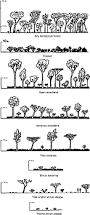 Tropical Savanna Dominant Plants - chapter ii diversity of woody vegetation formations and summary