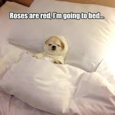 Dog In Bed Meme - dog in bed meme spiritualite 101 com