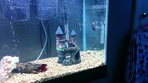 55 gallon aquarium light 55 gallon fish tank from walmart youtube