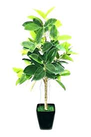 plants that need low light low sunlight plants low light house plant best plants to grow