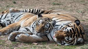 Arkansas wild animals images Lions tigers and bears seeing wild animals in the natural state jpg