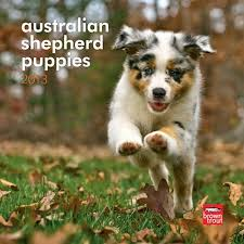 australian shepherd gifts 8 best australian shepherd gifts images on pinterest aussie