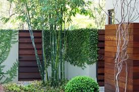 Bamboo Garden Design Ideas Amusing Japanese Bamboo Garden Design Contemporary Best Ideas