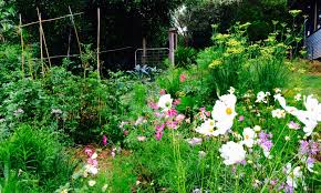 our permaculture life how to create a bee friendly garden