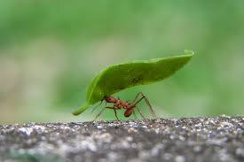common ants invading commercial properties orkin