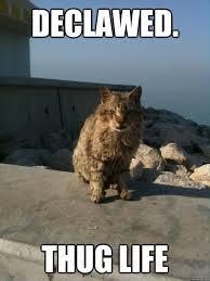 Cat Pic Meme - top 26 thug life cat memes thug life meme