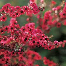 428 best australian gardens etc images on