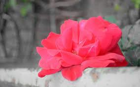 Cute Flower Wallpapers - green cute flower red organic life wallpapersbeautiful flower