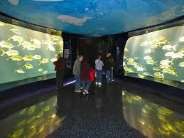 once upon a garden blog christmas vacation at the georgia aquarium
