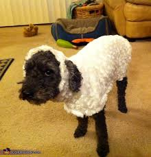 Halloween Costumes For Dogs Little Lost Sheep Costume For Dogs