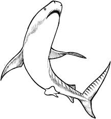 coloring pages shark coloring pages free whale shark coloring