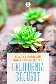 5 native plants 5 solutions families can do to help with the california drought