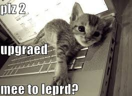 Lol Cat Meme - funny lol cat meme