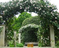 pergola rose trellis ideas extraordinary rustic trellis ideas