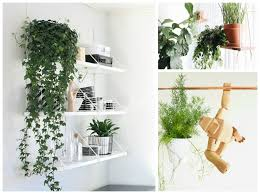 Hanging Plant 10 Hard To Kill Hanging Plants That U0027ll Make Your Home Look Amazing