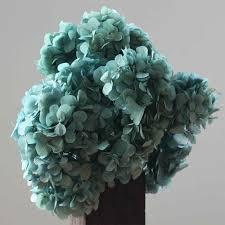 dried hydrangeas dried flowers dried blue hydrangeas