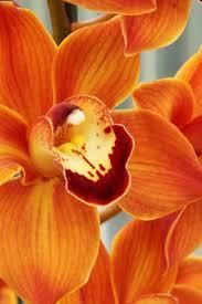 orange spice color 82 best orange spice images on pinterest orange color