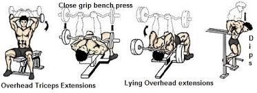 Bench Press For Biceps - muscle specific training 3 u2013 triceps or is it triceratops flat