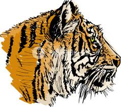 sketch of white tiger vector illustration royalty free stock