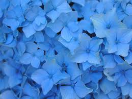 light blue flowers light blue flowers and leaves wallpapers on we heart it