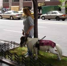 Dogs For The Blind Jobs Guide Horse Foundation Miniature Horses For The Blind
