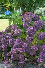 Purple Hydrangea Stacked Lime And Purple Hydrangeas For A Fall Mantelfunky Junk