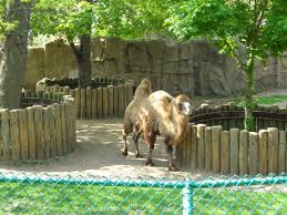 lincoln park zoo chicago kavi360