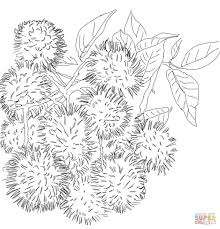 rambutans on tree coloring page free printable coloring pages