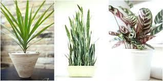 best light for plants office plants no light office plants no light awesome ideas