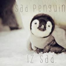 Cute Penguin Meme - sad penguin know your meme