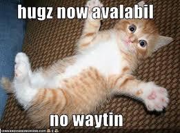 Cat Hug Meme - big hug meme hug best of the funny meme
