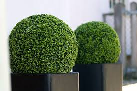 1 toronto topiary rentals topiary trees rentals in