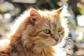 Eye Ducts Anatomy Cat Eye Infection Recognize The Signs Canna Pet
