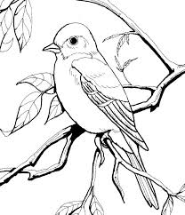 sweet design bird coloring book bird coloring