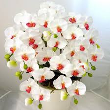 White Orchid Flower Aliexpress Com Buy Potted Plants Phalaenopsis Orchid Flower