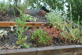 roof gardens for residential sites sage advice