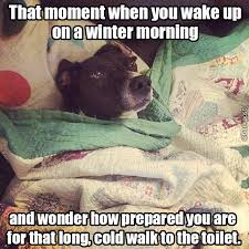 Winter Meme - 17 dog pictures that perfectly sum up your hatred of winter barkpost