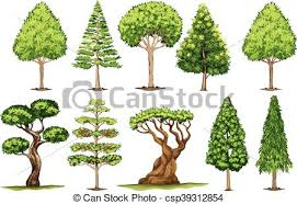 Different Types Of Trees | different types of trees illustration clipart vector search