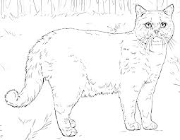 cats coloring pages free printable cats coloring pages pata sauti