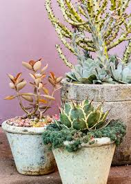 Fragrant Plants For Pots 14 Low Water Container Plants Sunset Magazine Sunset Magazine
