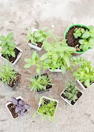 Herb Container Garden - living well 7 secrets for a successful container garden design mom