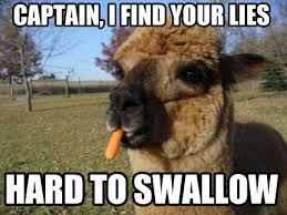 Alpaca Sheep Meme - pretty alpaca sheep meme random thoughts thread page 2410 scion fr