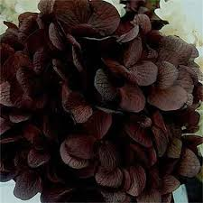 Bulk Hydrangeas 37 Best Dried And Preserved Hydrangeas Images On Pinterest